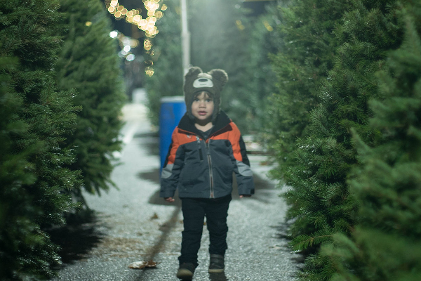 Inwoners Van Ermelo En Harderwijk Kunnen Kerstbomen Inleveren Veluwefm